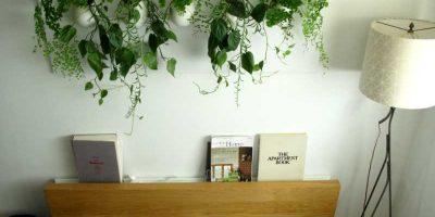 piante-in-camera-da-letto