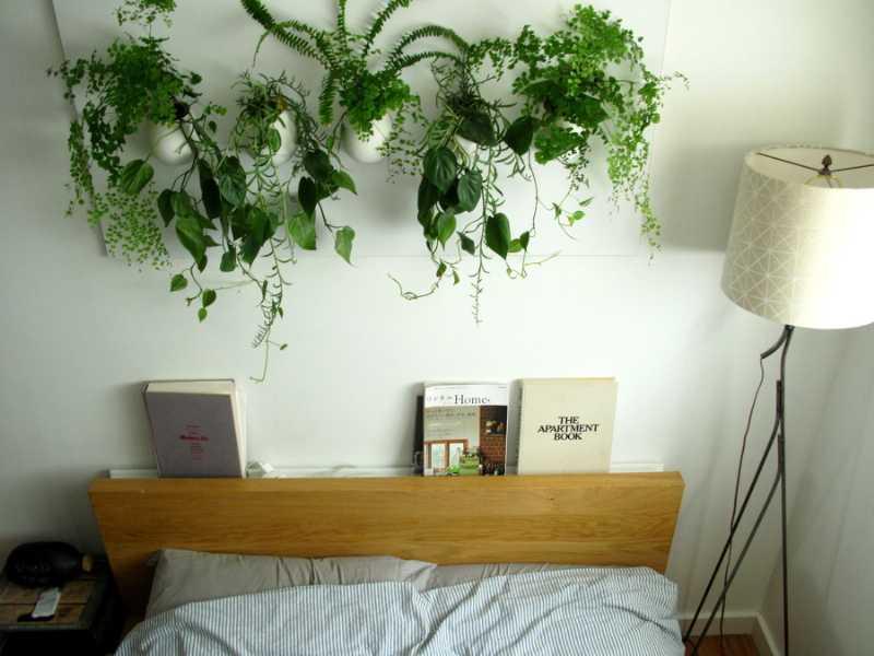 Perch tenere delle piante in camera da letto la risposta di - Piante per camera da letto ...