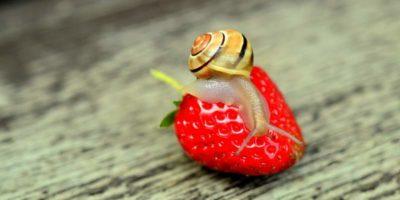 strawberry-799597_1920_800x530