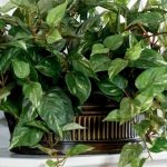piante-artificiali_NCG4_800x430