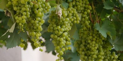 storia del vino_800x600