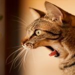 perchè i gatti sono terrorizzati dai cetrioli