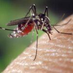 perchè prude la puntura di zanzara